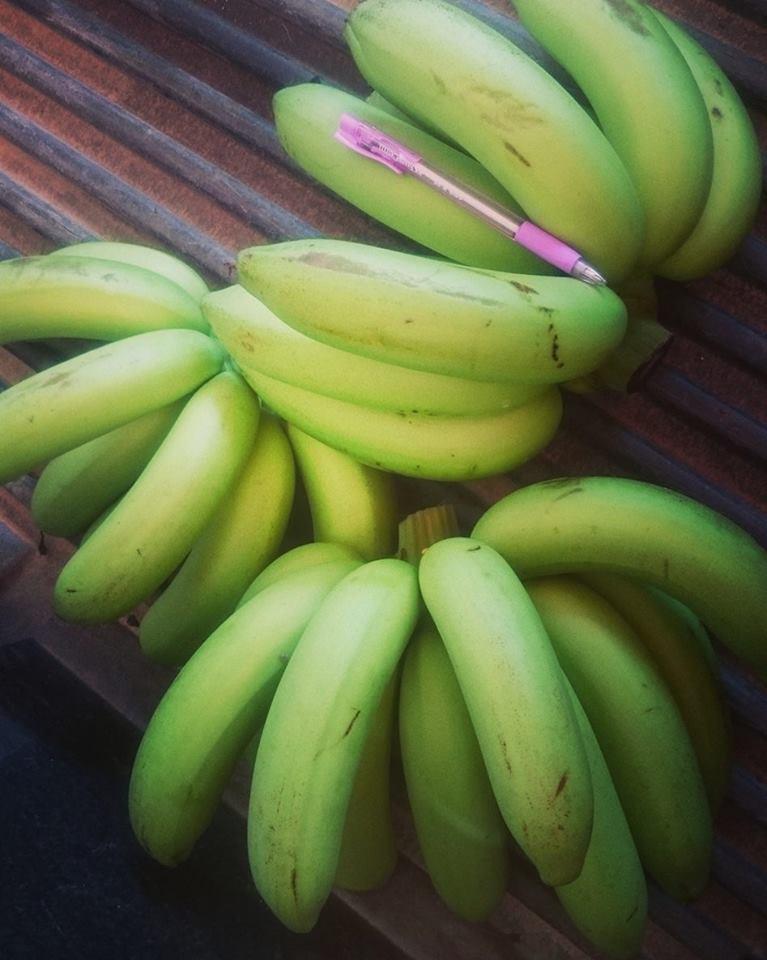 กล้วยหอมทองอินทรีย์