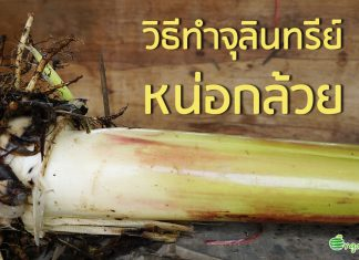 วิธีทำจุลินทรีย์หน่อกล้วย