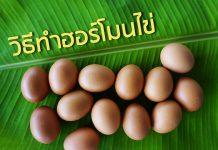 วิธีทำฮอร์โมนไข่