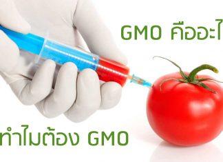 GMO คืออะไร ทำไมต้อง GMO