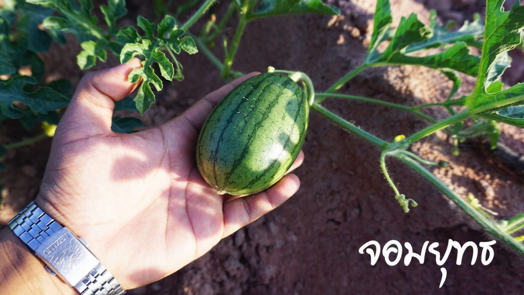 การบริหารพื้นที่การทำเกษตร