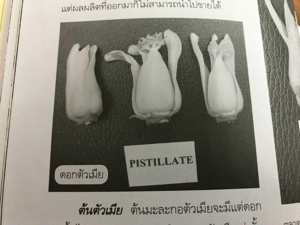วิธีการแยกเพศมะละกอ