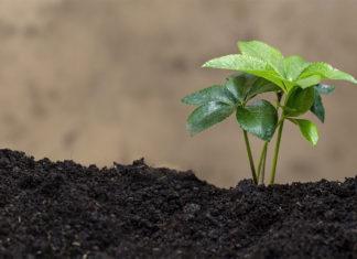 จุลินทรีย์ที่ใช้ในการทำเกษตร