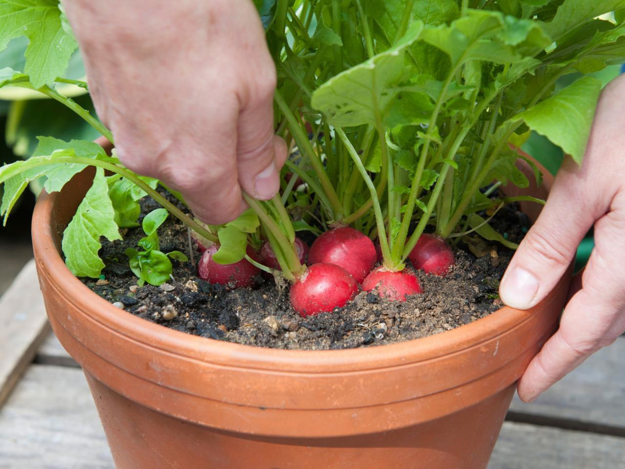 100 ไอเดียแปลงปลูกผักสวนครัว สวยๆ แบบประหยัดพื้นที่ แบบเกษตรพอเพียง